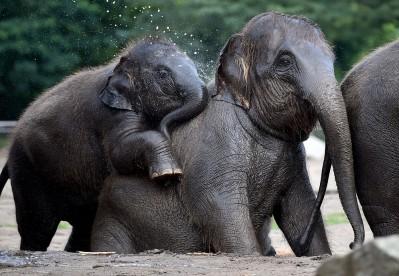 Baby elephant Edgar