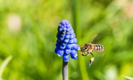 Bee collects pollen