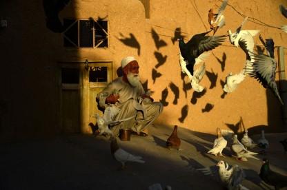 Afghan pigeon fancier