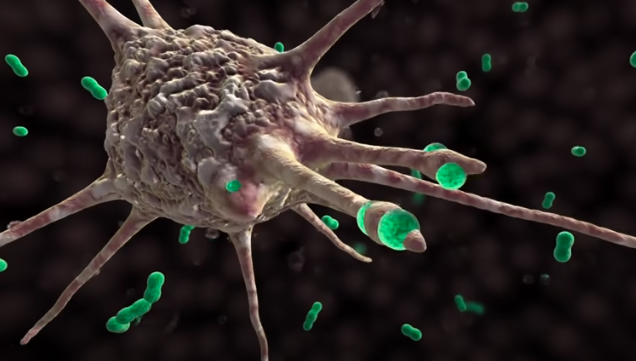 COVID-19 Animation: What Happens If You Get Coronavirus?