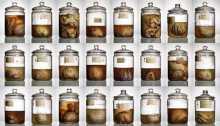 100 brains jar missing from Texas University