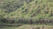 3 people trampled to death by wild elephants in Ctg