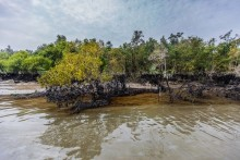 UN delegation on the way to Sundarbans