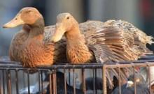 4 die of Bird Flu in Libya: minister