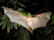 First Ebola victim may have been infected by bats: research