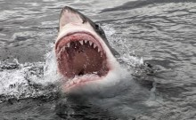 Teenage boy attacked by \'shark\' off Australian beach