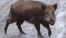 Soviet Union collapse 'affected region's wildlife'