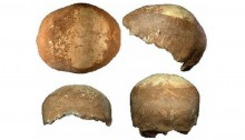 Skull clue to exodus from Africa