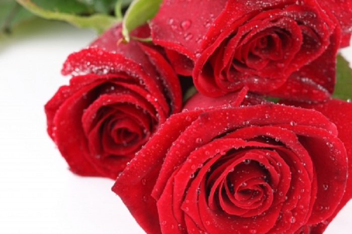 Valentine's Day Special: Top 5 Creative Ways to Preserve Red Roses