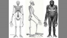 12-mn-year-old fossil may reveal when humans began to walk
