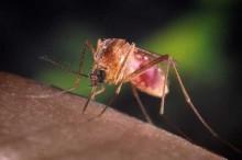 Vitamin A may protect kids against malaria