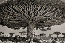 Ancient Art of Trees: Woman Spends 14 Years Photographing Those