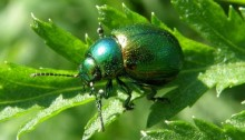 Conservation concern for UK insects