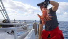 Scuba divers lead charge against invasive lionfish