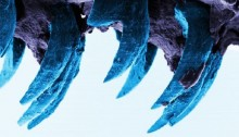 Limpet teeth set new strength record
