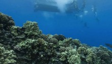 Fears over plastic-eating coral in Australia\'s Barrier Reef