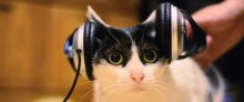 Scientists create music for cats