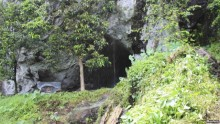 Ancient Teeth Show Earlier Human Life in Rainforests