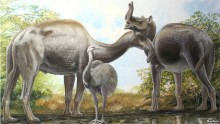 Mystery of Darwin\'s Strange South American Mammals Solved