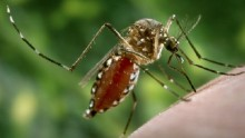 Mosquitoes \'could bring exotic diseases to UK\'