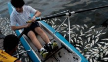 Tonnes of dead fish removed from Rio Olympic rowing venue