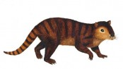 Newly-discovered mammal species survived dinosaur extinction