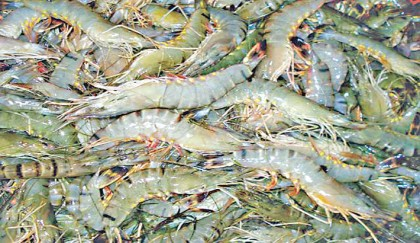 Fall in shrimp production hits frozen food exports