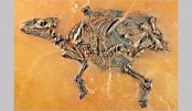 Ancient horse-like foetus discovered