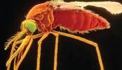 Drug-resistant malaria!