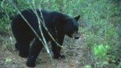 Florida holds hunt to kill 320 bears