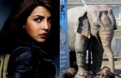 Priyanka Chopra becomes the voice of PETA's robotic elephant