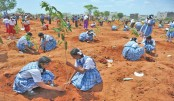 World record in highest tree plantation in a day