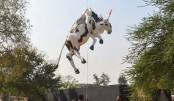 Indian police apologise for cow art raid
