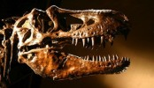 Canadian dinosaur closely related to mammals