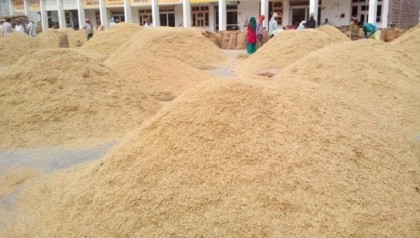 Farmers hit hard by low paddy price
