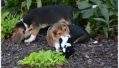 World's first IVF puppies born to surrogate mother dog