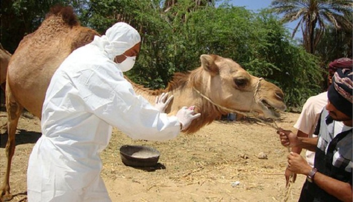 Mers vaccine 'a step closer', say scientists