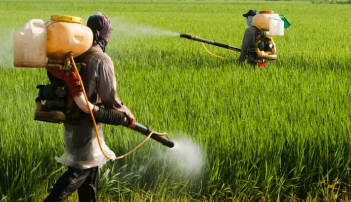Banned Pesticides Still Widely Used In Country 2016 01