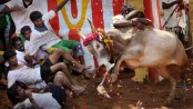 India order to allow Tamil Nadu bullfighting challenged
