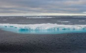 Arctic animals navigate by the light of winter moon: Study