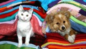 Winter care for your furry friends