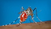 Baby Born in Hawaii With Zika Virus