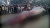 30-Foot Whale Dead On Mumbai's Juhu Beach, Cranes To Remove Body