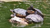 Prehistoric humans savoured roasted turtles!