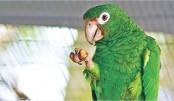 Endangered parrots to have genomes sequenced
