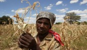 Zimbabwe declares 'state of disaster' over drought
