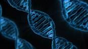 Genetic link found between mental disorders, diabetes