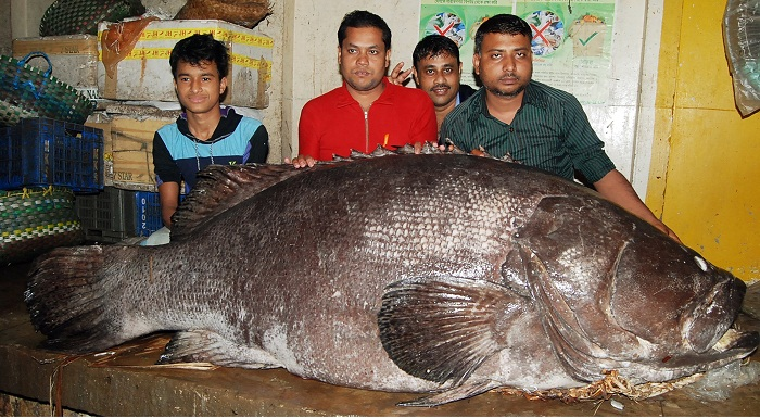 Gigantic Koral captured in Cox's Bazar
