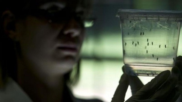 Fish, other mosquitoes now warriors in Zika battle