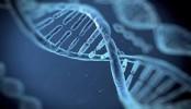 How genetics regulate ageing